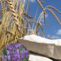 5 Dinkelkissen 40 x 60 cm mit Lavendel